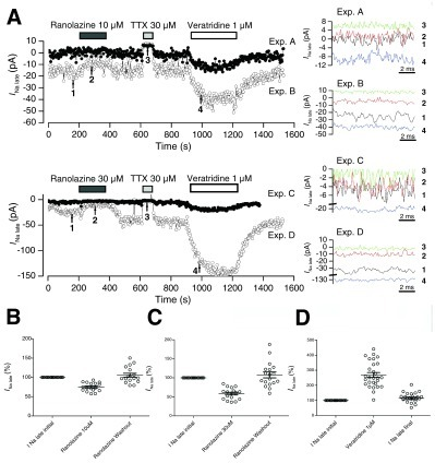 Effects of ranolazine, TTX and veratridine on the late Na+ current in Nav1.5-expressing cells.A. Time plots ofINa late in four typical experiments. Intervals of application of ranolazine 10 or 30 μM, TTX 30 μM, and veratridine 1 μM are indicated. Right panels:INa late traces from 260 to 270 ms at the time points marked with arrows and numbered in the left panels.B andC. Effects of ranolazine 10 and 30 μM, respectively, on relative levels of TTX-sensitive late Na+ current.D. Effect of veratridine 1 μM. Mean values are indicated for each condition, and error bars represent SEM.