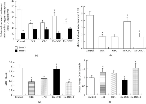 Mitochondrial oxidative phosphorylation efficiency was evaluated based on mitochondrial state 3 and 4 oxygen consumption (a), the respiratory control rate (RCR) (b), the ADP/O ratio (the nanomoles of ADP phosphorylated by the nanomoles of O2) (c), and proton leakage (oligomycin-inhibited respiration) (d). Respiration was induced with pyruvate/malate (5 mM each) as energizing substrates and ADP (200 μM) to initiate state 3 respiration. Data are presented as the mean ± SE (n = 6 per group). *P < 0.05 versus the control group; †P < 0.05 versus the OPC group; #P < 0.05 versus the Ex-OPC group.