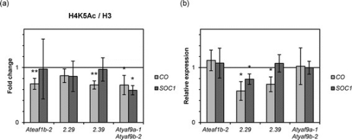COis more affected thanSOC1inAteaf1b-2andAtEAF1-amiRNA lines. (a) H4K5 acetylation levels in the promoters of CO and SOC1 normalized to H3 presented as fold change over WT Col-0. (b) Expression levels of CO and SOC1 relative to WT Col-0. Asterisks in (a, b) indicate a p-value < 0.05 or p-value < 0.01 (double asterisk) (t-test).