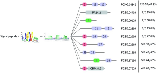 Examples for the variable C-terminal domain structures found in the [SG]-P-C-[KR]-P proteins. The [SG]-P-C-[KR]-P proteins feature a predicted signal peptide followed by the [SG]-P-C-[KR]-P motif, a serine/threonine rich stretch of variable length and a C-terminal domain. A representative member of the predicted tribes is shown on the right. The number of tribe members is given in the far right column followed by the mean  ratio and the percentage of tribe members that are under site-specific diversifying selection predicted by CODEML. Meme motifs are given with their respective number (see supplementary material, Supplementary Material online, for motifs) and Pfam domain hits are given with their identifier. PA14_2 (Pfam PF10528) is a GLEYA domain found in fungal adhesins and CBM_4_9 (Pfam PF02018) is found in carbohydrate-active enzymes.