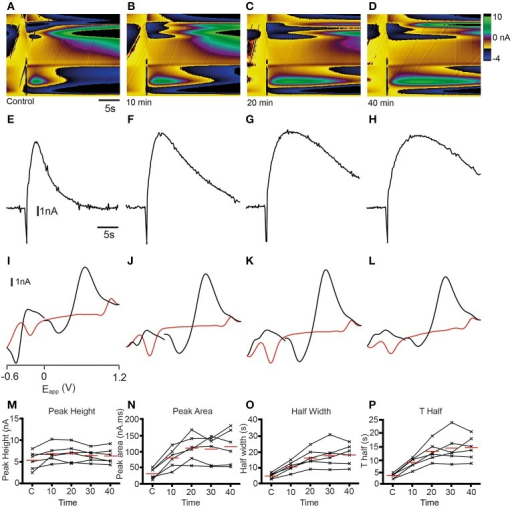Dopamine reuptake inhibition with cocaine modifies analyte release profile in the telencephalon. (A–D) Color plots showing the time course (x-axis) of changes in current as a function of the applied waveform (y-axis) after a control stimulation (A) and 10 (B), 20 (C), and 40 (D) min after 10 μM cocaine administration. (E–H) Current vs. time plots showing the time course of changes in current after a control stimulation (E) and 10 (F), 20 (G), and 40 (H) min after 10 μM cocaine administration. (I–L) Cyclic voltammograms extracted immediately following onset of release with oxidation and reduction peaks becoming larger at ~ +0.65 V and ~ −0.25 V over time; control stimulation (I) and 10 (J), 20 (K), and 40 (L) min after 10 μM cocaine administration. (M–P) Individual data points showing peak height (M), peak area (N), half width (O), and T half (P) for control stimulations (C1, C2, C3) or at the time points indicated.