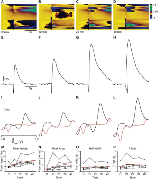 Dopamine reuptake inhibition with GBR 12909 modifies analyte release profile in the telencephalon. (A–D) Color plots showing the time course (x-axis) of changes in current as a function of the applied waveform (y-axis) after a control stimulation (A) and 10 (B), 20 (C), and 40 (D) min after 10 μM GBR 12909 administration. (E–H) Current vs. time plots showing the time course of changes in current after a control stimulation (E) and 10 (F), 20 (G), and 40 (H) min after 10 μM GBR 12909 administration. (I–L) Cyclic voltammograms extracted immediately following onset of release, with oxidation and reduction peaks becoming larger at ~ +0.65 V and ~ −0.25 V over time; control stimulation (I) and 10 (J), 20 (K), and 40 (L) min after 10 μM GBR 12909 administration. Current vs. time plots showing the time course of changes in current after a control stimulation (I) and 10 (J), 20 (K), and 40 (L) min after 10 μM GBR 12909 administration. (M–P) Individual data points showing peak height (M), peak area (N), half width (O) and T half (P) for control stimulations (C1, C2, C3) or at the time points indicated.
