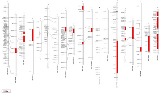 Overview of the maize chromosomes 8 together with the consensus chromosome. Overview of chromosome 8 for the 18 mapping experiments involved in the meta-analysis of flowering time in maize. The first chromosome at the left represents the consensus chromosome obtained by applying the WLS approach as described in the first section of the article (implemented into ConsMap). The filled marker intervals indicate that the standardized residual between the interval distance estimates of the original chromosome and the consensus one exceeded the double-sided 95% percentile of a normalized centered gaussian. This figure has been created by the program MMapView.