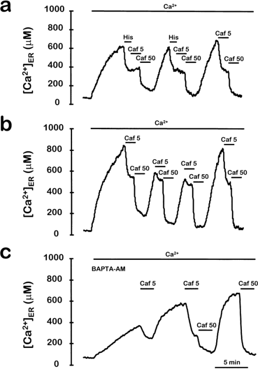 Regulation of caffeine-induced Ca2+ release by  [Ca2+]ER. The ER was refilled by perfusing with medium containing 1 mM Ca2+ and then 1 μM histamine or different concentrations of caffeine were added, as indicated. In the experiment  shown in c, cells were incubated with 10 μM BAPTA-AM during  aequorin reconstitution in order to load the cytosol with this  Ca2+ chelator. Other details are as in Fig. 1.