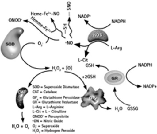 Interaction of GP with the oxidative stress (Merck, Calbiochem 2006/2007 catalogue).