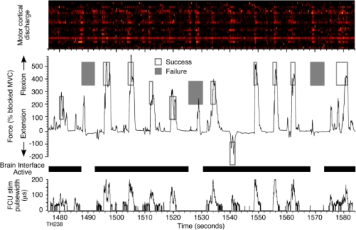 Brain-controlled FES command signal and resulting force.Uppermost panel shows the modulation of the 25 neurons used for control. The discharge of each neuron has been normalized to the peak rate that occurred within this segment of data. The FES-mediated force curve produced by monkey T during a continuous series of trials to different force targets (rectangles) is shown immediately below. Targets for successful trials are shown by open rectangles. Failed trials (filled rectangles) occurred only during random catch trials in which the brain interface and FES were not active (gaps in the heavy black bar). The bottom trace shows the FES pulse widths for wrist muscle flexor carpi ulnaris (FCU).