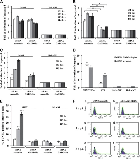Gadd45α triggers Shigella-mediated apoptotic cell death in infected HeLa cells. Activity of caspase-8 (A), caspase-9 (B) and caspase-3 (C), and TUNEL assay (E and F) on HeLa cells transiently transfected with a Gadd45α or a scramble siRNA. Cells were infected with M90T at MOI of 100 for the reported time points. HeLa cells treated with STP or with CHX plus TNF-α, as detailed in Figure 2, were used as a control (D). HeLa NI, non-infected HeLa cells. Report assay data correspond to the mean±S.D. (triplicate determinations) and are representative of three independent luminometric assays. *P<0.05, **P<0.01, ***P<0.001 after Student's t-test. (F) A representative cytofluorimetric output of TUNEL analysis performed at 1 h (upper panel, a and b), 3 h (middle panel, c and d) and 5 h of incubation p.i. (lower panel, e and f)