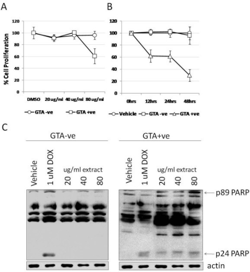 Proliferation of SW620 cells treated with GTA+ve and GTA-ve extracts. (A) SW620 cells were incubated with increasing concentrations of GTA+ve and GTA-ve extracts for 24 hours and proliferation assayed by MTT. (B) The 80 ug/ml concentration of GTA+ve and GTA-ve extracts was then used to treat cells for up to 48 hours and the effect on cell proliferation assayed by MTT. Data are expressed as percent of vehicle or 0 hrs ± 1S.D. (C) Representative Western blot analysis of caspase-mediated PARP cleavage fragments resulting from treatment with GTA+ve and -ve extracts. Experiments were repeated at least three times.