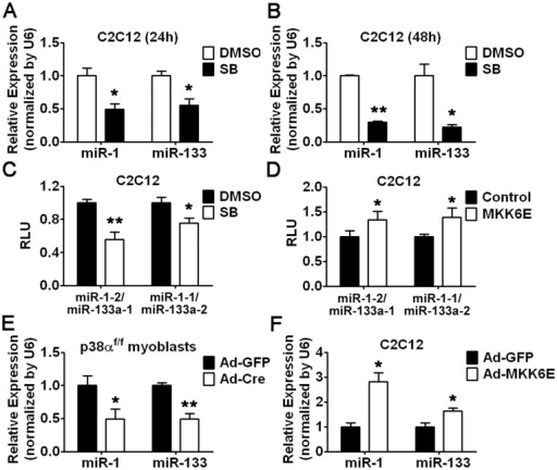 p38 Activity is Required for miR-1/133a Cluster Transcription.(A and B) Real-time RT-PCR analysis of miR-1/133 expression in C2C12 myoblasts treated with SB203580 for 24 hours (A) or 48 hours (B) as indicated. (C and D) Enhancer activity of miR-1–2/miR-133a-1 or miR-1–1/miR-133a-2 cluster in C2C12 myoblasts treated with SB203580 for 24 hours (C) or infected with MKK6E (D). (E and F) Real-time RT-PCR analysis of miR-1/133 expression in p38αf/f myoblasts infected with Ad-Cre or Ad-GFP as a control (E) or in C2C12 myoblasts infected with adenoviral MKK6E (Ad-MKK6E) or Ad-GFP (F). Error bars represent the SD of three independent experiments. *p<0.05, **p<0.01.
