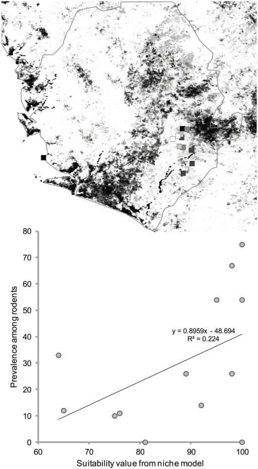 "Detail of Sierra Leone from the ""corrected"" model shown in Figure 4.The top panel shows the modeled suitability (black = low, white = high) and LASV-infected rodent prevalences at 13 sites across the country (shading within squares, black = low, white = high). The bottom panel shows the relationship between LASV prevalences in rodents and modeled LF suitability."