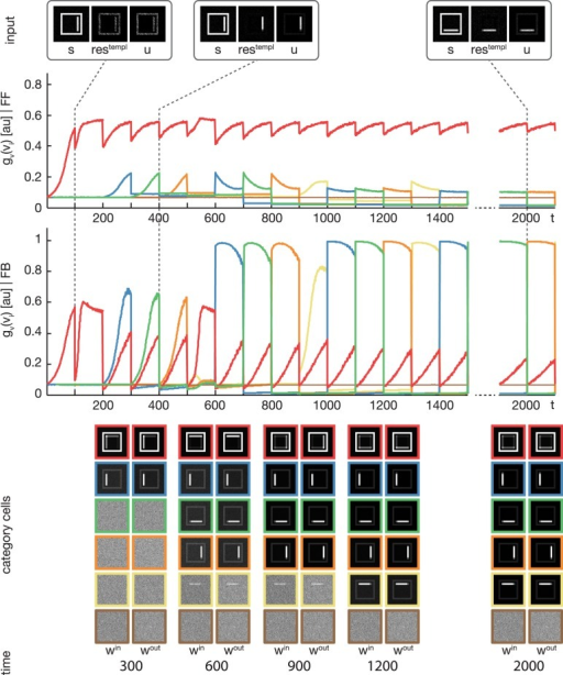 Experiment 1. The model was trained using four rectangular shapes (see Figure 3, category B) as input stimuli. Stimuli were presented in sorted blocks. Six category cells (color-coded) were initialized with random weights. The first row shows exemplary input configurations s, along with the corresponding residual signal restempl and the input signal u after feedback modulation. In the second row, the activities of the six category cells before the feedback sweep are shown. As can be seen, before the feedback is effective on the input, only one cell (encoded in red) responds to all input configurations. This cell represents the overall category cell. The second row shows the activities after the feedback sweep. In the last row the corresponding category cell weights are displayed framed by colors according to the activity plots. It can be seen, that in the beginning all inputs are learned into one category cell. After about 200 training steps, the effect of the feedback is high enough to trigger the learning of a new subcategory representation. This process repeats several times, until each subcategory is represented by an own category cell.