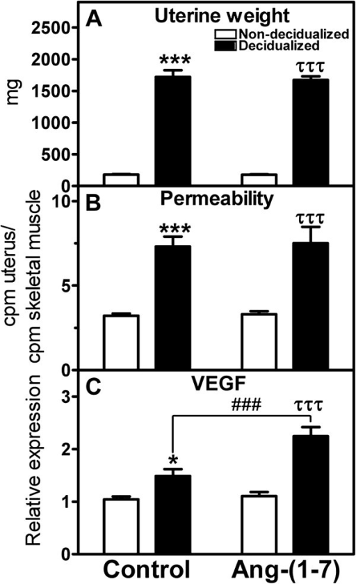 Effects of local intra-uterine infusion of Ang-(1–7) in the decidualized horn on uterine weight (A), permeability (B), and VEGF relative gene expression (C) in non-decidualized vs decidualized uterus. Data are expressed as mean +/− SEM. n = 9–10. *p < 0.05, ***p < 0.001 vs. non-decidualized control; ###p < 0.001 vs. decidualized control; τττp < 0.001 vs. non-decidualized in the Ang-(1–7) treated animal.