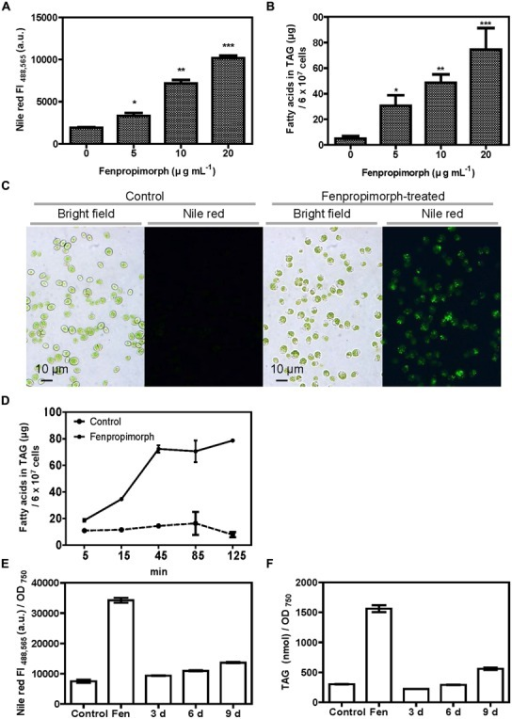 Fenpropimorph induces neutral lipid accumulation in Chlamydomonas reinhardtii. (A) Fenpropimorph-induced LD formation occurs in a dose-dependent manner. The fluorescence intensity (FI) of a neutral lipid specific-dye, Nile red, was determined. Late mid-log phase Chlamydomonas cells (N+, acetate+) were treated with ethanol (solvent control) or fenpropimorph (1 h, at RT). Averages from three replicate experiments are presented. Bars represent SE. Significant differences, as determined by Student's t-test, are indicated by asterisks (*p < 0.05, **p < 0.01, ***p < 0.001). (B) Fenpropimorph-induced TAGs were extracted and analyzed using biochemical methods. Control cells were treated with the same volume of ethanol used to dissolve fenpropimorph. Averages from triplicate experiments are presented. Bars represent SE. Significant differences, as determined by Student's t-test, are indicated by asterisks (*p < 0.05, **p < 0.01, ***p < 0.001). (C) Images of Nile red-stained LD accumulation in fenpropimorph-treated cells. Cells were treated with fenpropimorph for 1 h. Images were obtained using a fluorescence microscope. (D) Time-dependent change in TAG concentration in fenpropimorph-treated Chlamydomonas cells. TAG accumulation induced by fenpropimorph (10 μg mL-1) treatment was analyzed biochemically. Averages and SE from three replicate experiments are presented. TAG levels shown were converted to μg from nmol values obtained from GC experiment. The original nmol values for each time point (5, 15, 45, 85, and 125 min) were 26.8 ± 4.7, 40.9 ± 0.4, 51.2 ± 5.1, 66.1 ± 24.2, and 27.7 ± 5.7, respectively, for control samples, and 65.4 ± 3.0, 120.7 ± 1.2, 255.0 ± 8.5, 260.7 ± 21.9, and 278.0 ± 1.0, respectively, for fenpropimorph-treated samples. In experiments shown in (A – D), Chlamydomonas cells in late mid-log phase culture in TAP medium (N+, acetate+) were used. (E,F) Comparison of the effect of nitrogen deprivation and fenpropimorph treatment on lipid induction efficiency in Chlamydomonas cells. (E) Nile red fluorescence intensity of control Chlamydomonas cells, and of cells subjected to fenpropimorph treatment (1 h, 25°C), and nitrogen deprivation (for the indicated number of days). Chlamydomonas cells were grown in normal conditions to mid-log phase, and washed to remove acetate and nitrogen from the medium. They were then re-suspended in TAP medium without an acetate or nitrogen source, and then either treated with ethanol (solvent control) or fenpropimorph (10 μg mL-1) for 1 h, or transferred to the nitrogen-deficient conditions and incubated for 3, 6, or 9 days. The FI value was measured. Averages from three replicate experiments are presented. Bars represent SE. (F) Biochemical analysis of TAG content in cells treated as in (E). Averages from three replicate experiments are presented. Bars represent SE.