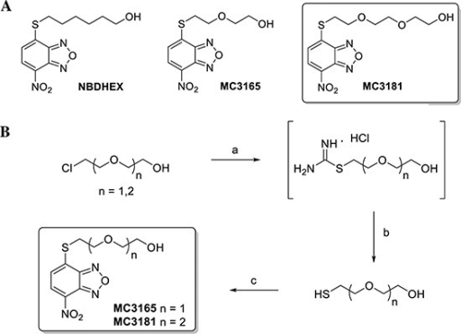 Structures and preparation of the NBDHEX derivatives MC3165 andMC3181(A) Chemical structures of NBDHEX, MC3165 and MC3181.(B) Scheme of MC3165 and MC3181 preparation. Thecompounds were obtained by a nucleophilic displacement reaction betweenthe commercial4-chloro-7-nitrobenzo[c][1,2,5]oxadiazole and the2-(2-mercaptoethoxy)ethanol and the2-(2-(2-mercaptoethoxy)ethoxy)ethanol, respectively. Reagents andconditions: a) Thiourea, H2O, N2, reflux, 18h; b)NaOH 5N, N2, reflux, 3h; c)4-chloro-7-nitrobenzo[c][1,2,5]oxadiazole,EtOH:H2O (0.3:1), pyridine, r.t., 4h.