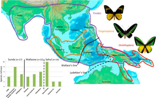 Distributional pattern of birdwing butterflies originally described by Wallace showing species richness west and east of Wallace's and Lydekker's lines, and in each important biogeographical unit of the Indomalayan-Australian Archipelago used here.Pictures of birdwing butterflies made by Fabien Condamine. Map drawn with PowerPoint by Fabien Condamine.