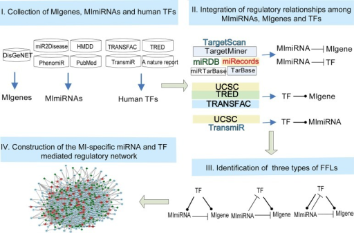 Workflow to construct the MI-specific miRNA and TF mediated regulatory network.Step 1: Collecting MIgenes, MImiRNAs and known human TFs from publicly available databases and literature. Step 2: Retrieving regulatory relationships among MIgenes, MImiRNAs and known human TFs using an integrated strategy. Step 3: Identifying three types of FFLs based on the relationships among MIgenes, MImiRNAs and known human TFs. Step 4: Constructing the MI-specific miRNA and TF mediated regulatory network by merging the FFLs obtained in step 3.