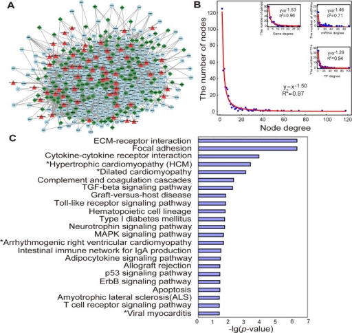 MI-specific miRNA and TF mediated regulatory network and its structure and functional features.(A). The MI-specific miRNA and TF mediated regulatory network was composed of MIgenes (circles), MImiRNAs (triangles) and TFs (diamonds). This network consists of 438 nodes and 1,780 links. (B). Degree distribution of all the nodes in the network, and degree distribution of genes, miRNAs and TFs in the network. (C). Significantly-enriched KEGG pathways for MIgenes in the network (cancer pathways removed). p-value was adjusted using the Benjamini-Hochberg multiple testing correction and a p-value of <0.05 was used as a threshold to select significant KEGG pathways. '*' indicated the pathways belonged to cardiovascular disease pathways in KEGG.