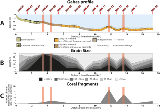 (A) Depth as a function of the distance with the representation of the different sedimentary facies. (B) Grain size distribution along the transect. (C) Coral fragments distribution along the transect.