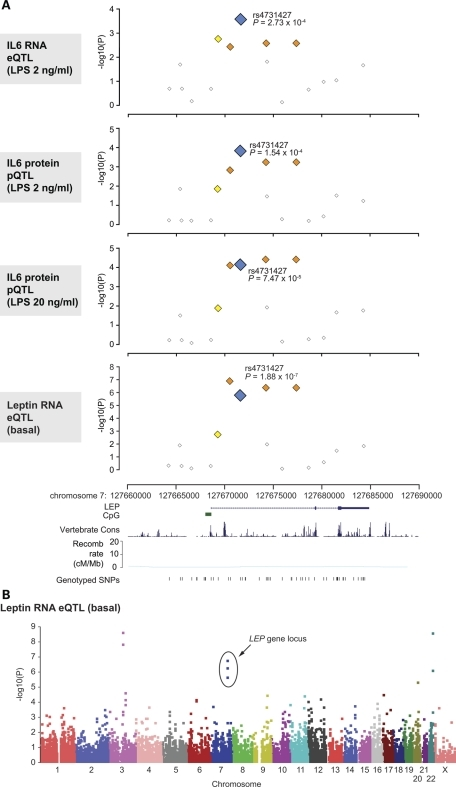 Common SNP markers in LEP are associated with IL-6 and leptin expression. (A) Single marker allelic association results for LEP gene locus with IL-6 or leptin expression plotted as −log10(P) values by genomic coordinate. With reference to rs4731427, SNPs with MAF greater than 5% and r2 < 0.2 are shown as white squares, 0.2–0.5 (yellow) and 0.5–0.8 (orange). LEP gene structure and genotyped SNPs are shown below. Estimated recombination rates are shown from HapMap (using Build 35 coordinates). Gene structure, vertebrate multiz alignment and conservation track (17 species) (49) and genotyped SNP locations adapted from screenshot of the UCSC Genome Browser (Human March 2006 Assembly). (B) Manhattan plot showing strength of association from PLINK analysis plotted as −log10(P) values by chromosome for leptin expression.