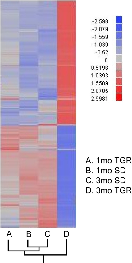 Hierarchical clustering analysis of gene profiling in SD and TGR rats at 1- and 3-month.Only genes with negative log10 P>10 are shown on the clustering diagram. The diagram shows that TGR 1-month, SD 1- and 3-month have similar gene expression profiling whereas 3-month TGR differs markedly from these three groups. Red indicates high and blue low expression of the single gene compared with the mean. The fold changes in the bar are represented in log2X. A: 1-month TGR; B: 1-month SD; C: 3-month SD; D: 3-month TGR.