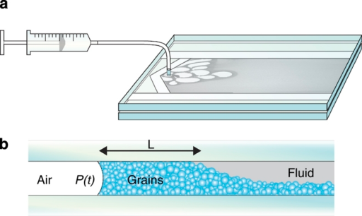 Setup and displacement process.(a) Air is slowly injected into a linear Hele-Shaw cell loaded with polydisperse glass beads (∼100 μm diameter) submersed in a water/glycerol solution. The gap is Δz=0.5 mm and the cell forms a channel 20 cm wide and 30 cm long. The granular material settles after loading. (b) The invading air/fluid interface accumulates a front of close-packed grains in the gap between the plates.