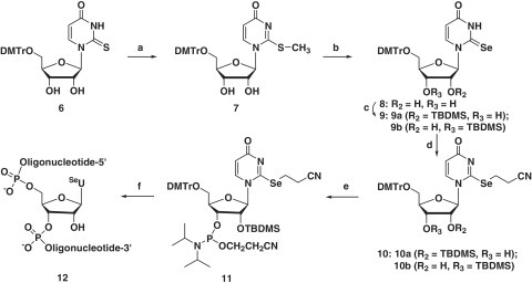 Synthesis of SeU-phosphoramidite 11 and RNAs (12). Reagents and conditions: (a) CH3I, DBU, DMF; (b) Se, NaBH4, EtOH; (c) TBDMS-Cl, imidazole, DMF; (d) ICH2CH2CN, (i-Pr)2NEt, CH2Cl2; (e) (i-Pr2N)2P(Cl)OCH2CH2CN, (i-Pr)2NEt, CH2Cl2; (f) solid-phase synthesis.