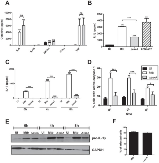 The ESX-1 secretion system of Mtb does not affect secretion of proinflammatory cytokines in dendritic cells but is important for complete inflammasome activation.BMDCs were left uninfected (UI), infected with wild-type Mtb (Mtb) or the esxA deletion mutant (ΔesxA) for 4 h at MOI of 10, washed and incubated for an additional 24 h (A+B) or the indicated timepoints (C+D). (A) The cytokine profile in the supernatants was analyzed using a bead-based immunoassay (black =  uninfected, white =  Mtb, gray =  ΔesxA). (B) and (C) IL-1β secretion was analyzed by ELISA. (D) The percent of cells with activated caspase-1 was determined via flow cytometry using fluorescent caspase-1 substrates (FLICA). (E) Pro-IL-1β protein levels in BMDCs. (F) GFP-labeled bacteria were used to infect BMDCs and rate of infection was determined via flow cytometry. Shown are means and standard deviation of triplicate measurements of one representative experiment out of three. In all figures, the asterisks denote range of p values (* = p<0.05, ** = 0.01>p>0.001,***p<0.001, ns =  not significant ) as determined by one way ANOVA with Tukey's post test.
