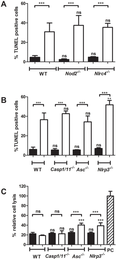 The inflammasome is not involved in BMDC host cell death induction after Mtb infection.BMDCs from indicated wild-type or knockout mouse strains were infected with Mtb (white bars) or left uninfected (black bars). After 24 h the amount of TUNEL positive cells was determined in (A) and in (B). In (C) the amount of necrosis was determined via analysis of the release of adenylate kinase into the supernatant of infected cells relative to detergent lysed cells (PC). Shown are means and standard deviation of triplicate measurements of one representative experiment out of three.