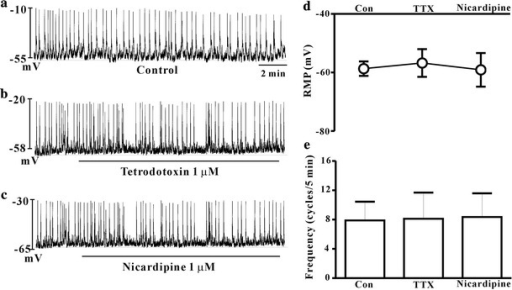 Effects of voltage-dependent Na+ or L-type Ca2+ channel blocker on the spontaneous pacemaker potentials in cultured ICCs of the mouse colon. Control (a), tetrodotoxin (TTX; 1 μM) (b) and nicardipine (1 μM) (c) had no effect on the spontaneous pacemaker potentials in current clamping mode. The effects of TTX and nicardipine on pacemaker potentials are summarized in d and e. Bars represent mean ± SE values (p < 0.05) con control, TTX tetrodotoxin