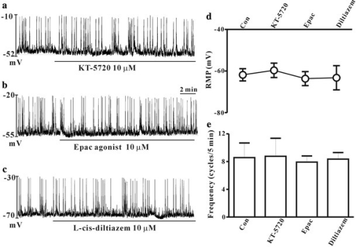 Effects of protein kinase A (PKA) inhibitor, cAMP-regulated guanine nucleotide exchange factor (Epac) agonist, and cyclic nucleotide gated (CNG) channel blocker on the spontaneous pacemaker potentials in cultured ICCs of the mouse colon. KT-5720, a PKA inhibitor (10 μM) (a), 8-pCPT-2′-O-Me-cAMP, an Epac agonist (10 μM) (b), and l-cis-diltiazem, a CNG channel blocker (10 μM) (c) had no effect on the spontaneous pacemaker potentials. The effects of KT-5720, 8-pCPT-2′-O-Me-cAMP and l-cis-diltiazem on pacemaker potentials are summarized in d and e. Bars represent mean ± SE values (p < 0.05)