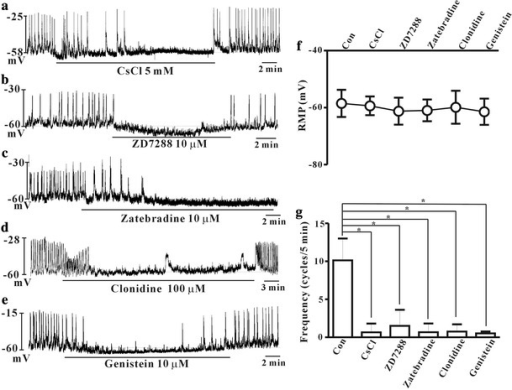 Effects of hyperpolarization-activated cyclic nucleotide (HCN) channel blockers on the spontaneous pacemaker potentials in cultured ICCs of the mouse colon. CsCl (5 mM) (a), ZD7288 (10 μM) (b), zatebradine (10 μM) (c), clonidine (100 μM) (d), and genistein (10 μM) (e). All traces showed the reduced frequency of pacemaker potentials. The effects of these drugs on pacemaker potentials are summarized in f and g. Bars represent mean ± SE values (p < 0.05)