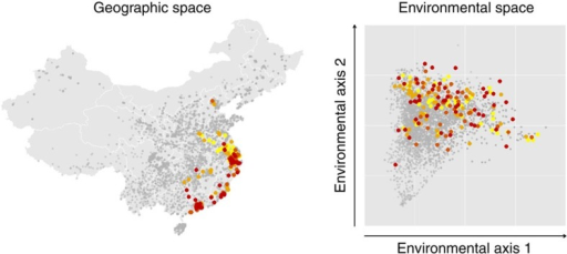 Distribution of potential H7N9-positive markets in mainland China in geographic and environmental space.In each panel, the distribution of H7N9-negative markets is shown by grey points. Potential H7N9-positive markets are shown by coloured points, with colours denoting the chronological order of cases. Colours range from yellow (earliest cases 19 February 2013) through light and dark orange to red (most recent cases 27 January 2014). Here environmental space is the Cartesian coordinate system defined by the first two principal components of environmental covariates at all market locations, which describe 56% of variation in the data set. The same pattern is apparent between other pairs of environmental axes, as illustrated in Supplementary Fig. 1.
