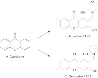Chemical structures of (A) xanthone, and the derivatives of (B) xanthone 1101 and (C) xanthone 1105 used in this study