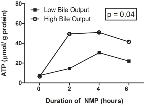 Changes in hepatic energy content as reflected by hepatic ATP content.In contrast to livers with low bile output, livers in the high bile output group showed a significantly higher hepatic ATP content during the course of NMP. (AUC p = 0.04).
