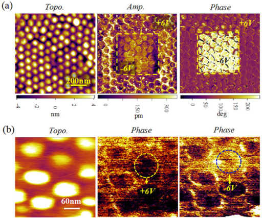 Piezoresponse images for the polarization reversal process in the nanocapacitor arrays.(a) Topological, and piezoresponse amplitude and phase images for the nanocapacitor array, in which in the middle square area was poled downwards (with a bias voltage of −6 V) while the rest part was upwards with a voltage of +6 V; (b) the piezoresponse phase images illustrating the polarization reversal for a selected nanocapacitor dot, which was poled upwards and then downwards using bias of ±6 V, respectively.