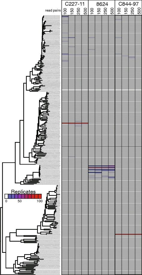 A phylogeny and associated heatmap showing the placement of read subsamples for 100 iterations of three E. coli isolates. The maximum likelihood phylogeny was inferred by RAxML [20] from a concatenation of approximately 225,000 single nucleotide polymorphisms called against the reference genome, K-12 W3110 [30]. Raw reads were randomly sampled from three genomes at four different depths and reference positions were identified. Each genome, at each level, was then inserted into the phylogeny with the evolutionary placement algorithm (EPA) in RAxML [26]. Duplicate placements were removed from the tree and redundancies were represented as a heatmap