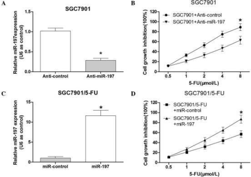 Expression levels of miR-197 affect the sensitivity of SGC7901 cells to 5-FU. (A) Following transfection with anti-miR-197, the expression levels of miR-197 were significantly reduced in SGC7901 cells. (B) Following transfection with anti-miR-197 or control, SGC7901 cells were treated with various doses of 5-FU (0.5, 1.0, 2.0, 4.0 or 8.0 µmol/l) for 48 h. An MTT assay was performed to determine the cell growth inhibition. (C) Following transfection of the miR-197 mimics, the expression levels of miR-197 were significantly increased in SGC7901/5-FU cells. (D) Following transfection with the miR-197 mimics or control, the SGC7901/5-FU cells were treated with various doses of 5-FU (0.5, 1.0, 2.0, 4.0 and 8.0 µmol/l) for 48 h. The MTT assay was performed to determine the cell growth inhibition. Values are expressed as the mean ± standard deviation (n=3). *P<0.05 vs. control. miR-197, microRNA-197; 5-FU, fluorouracil; SGC7901/5-FU, SGC7901 cell line resistant to 5-FU.