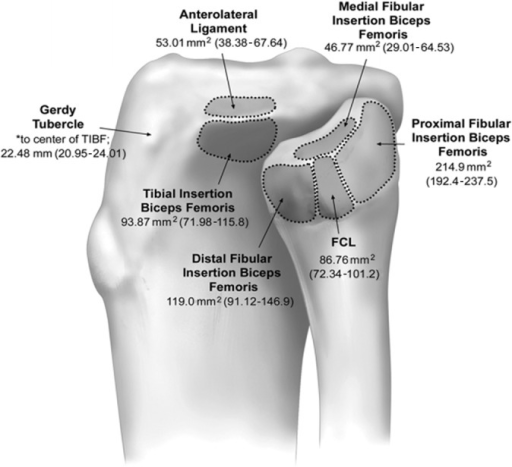 The proximal fibula and tibia with anatomic footprints | Open-i