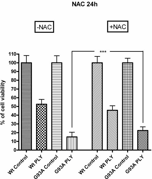 Radical scavenging by N-acetyl-cysteine. 24 hours of pre-incubation with the anti-oxidant N-acetylcysteine (NAC) in a concentration of 1 mM also resulted in an attenuation of the pneumolysin-induced neuronal injury in G93A-SOD1 (p < 0.0001), but not in Wt-SOD1 neuroblastoma cells.