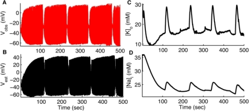 Assimilating seizure data from CA1 hippocampal OLM interneurons.Membrane potential measured (red) by whole cell recording from OLM interneurons during spontaneous seizures (A). In (B–D) we show membrane potential, , and  of the same cell respectively estimated (black) by using UKF. As shown in Figure S1, we also tracked the remaining variables for IN. Data provided by Jokubas Ziburkus. Panel (A) modified from [23] with permission American Physiological Society.