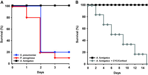 Survival following infectious challenges. (A) Using an experimental model of inhalational pneumonia in BALB/c mice, P. aeruginosa and S. pneumoniae both induced consistent mortality >80%, while mice challenged with A. fumigatus or PBS (sham) had 100% survival. (B) Mice treated with cyclophosphamide and cortisol prior to infection also consistently succumbed to A. fumigatus challenge, substantiating the effective delivery of pathogens to the mice (N = 10 mice/group, *p = 0.0007 vs. A. fumigatus, **p = 0.0001 vs. A. fumigatus, †p < 0.0001 vs. A. fumigatus).