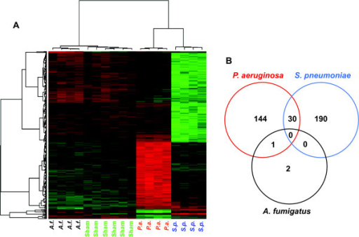 Differential gene expression 18 hours after infectious challenge. (A) A heatmap shows the expression patterns of 367 DEGs after inhalational challenge with P. aeruginosa, S. pneumoniae, A. fumigatus or PBS (sham). By unsupervised clustering, the samples all correctly segregate themselves by condition. (B) A Venn diagram indicates the striking specificity of these expression patterns, with <10% of DEGs induced or repressed by more than one condition.