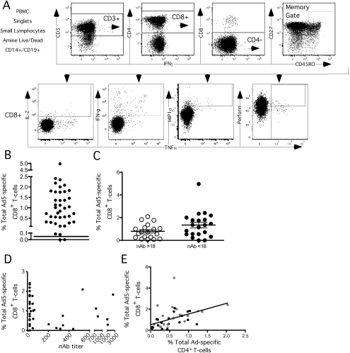 Baseline CD8+ T-cell responses.Forty total subjects with a range of Ad5 nAb titers were analyzed. Five seronegative (Ad5 nAb titer ≤18, gray symbols) and five seropositive subjects (Ad5 nAb titer >18, black symbols and white boxes) received Merck Ad5 gag/pol/nef as described in Methods. Each circle represents a subject with lines representing the mean. CD8+ T-cell responses were measured by flow cytometry following whole Ad5 vector stimulation. A) Gating strategy for measuring Ad5-specific T cells by intracellular cytokine staining. At least 100,000 PBMCs were collected on a modified LSR II. Singlets were selected with a FSC-A and FSC-H, followed by a lymphocytes gate, dead cell exclusion, and exclusion of contaminating CD14+ monocytes and CD19+ B-cells. CD3+ T-cells were selected and then CD8+ cells by CD8+CD4−. Central memory, effector memory and effector CD8+ T cells were selected before gating on each cytokine. Because cells can store perforin and these appear perforin+, Ad5-specific CD8+perforin+ T cells must also be positive for another function to be considered as a responding event. B) Total Ad-specific CD8+ response. The total Ad-specific CD8+ response was computed by summing cells making at least IL-2, IFN-γ, MIP1α, or TNFα as measured by flow cytometry. C) There was no difference in the magnitude of the Ad-specific CD8+ T-cell response between serogroups at baseline. D) There was no correlation between the magnitude of Ad-specific CD8+ T-cell responses and nAb titer at baseline. E) There is a correlation between the magnitude of Ad-specific CD4+ and Ad-specific CD8+ T-cell responses at baseline.