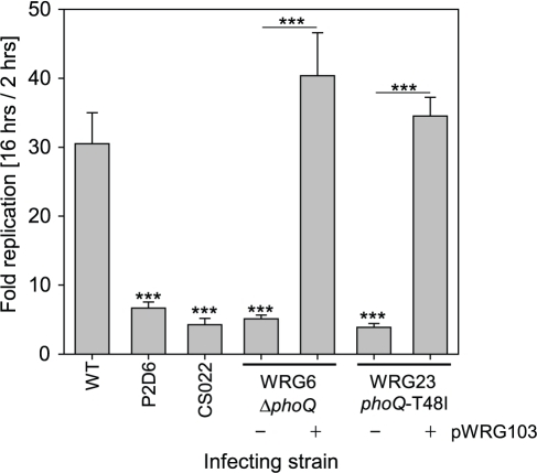 Quantification of intracellular survival within RAW264.7 macrophage-like cells using gentamicin protection assay.The intracellular replication rates of the mutant strains WRG6 (ΔphoQ) and WRG23 (phoQ-T48I) were compared to S. Typhimurium WT and the previously characterized mutants P2D6 (ssaV::mTn5) and CS022 (pho-24). After infection with a MOI of 5 non-internalized bacteria were killed by gentamicin treatment and the intracellular bacteria were quantified 2 h and 16 h after infection by plating of cell lysates. Intracellular replication rates are expressed by the quotient of 16 h colony forming units (CFU) and the 2 h CFU. One representative of three independent experiments done in triplicates is shown. Statistical analysis by Student's t-test was done by comparison with the WT or by comparing individual strains as depicted: *** P<0.001.