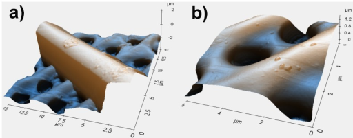 Details of a single costa (a) and single pores (b) of a valve obtained by means of Atomic Force Microscopy (AFM).