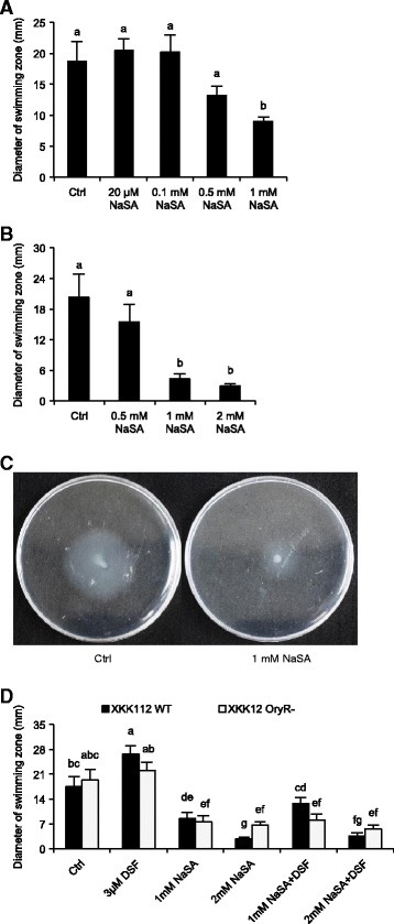 NaSA suppresses basal and DSF-induced swimming motility ofXanthomonas oryzaepv.oryzae(Xoo) strain XKK12 (pPIP122). (A) and (B) Various concentrations of NaSA were added to swimming plates prior to inoculation with 3 μl XKK12 WT (pPIP122) suspension (109 CFU/ml). The plates were incubated for four days at 25°C and evaluated by measuring the diameter of the swimming zone. Data are means ± SE. Different letters indicate statistically significant differences (Mann-Whitney: n ≥ 9; α = 0.05). (C), Phenotype of XKK12 WT (pPIP122) on swimming plates containing 0 (left) or 1 mM NaSA (right). (D), Effects of 1 mM NaSA, 2 mM NaSA and/or 3 μM DSF on the swimming of XKK12 WT (pPIP122) and oryR knockout mutant (pPIP122) (oryR−) bacteria. Data are means ± SE. Different letters indicate statistically significant differences (Mann-Whitney: n ≥ 9; α = 0.05).