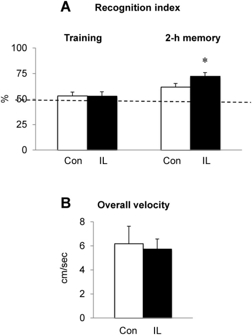 Effect of dietary iron loading on recognition memory in growing rats.Rats fed iron-loading or control diet were subject to the novel object recognition task in an open field where two identical objects were placed. Rat behavior was recorded for 5 min and time of interaction with each object was recorded to quantify recognition index during the training period (A). Following 2 h of training with two identical objects, one object was replaced with a different object and time of interaction with each object was recorded to calculate % recognition index (= interaction time with the novel object divided by interaction time with both novel and familiar objects) (A). Total velocity traveled in the field was also recorded (B). The dotted line represents a reference baseline of 50% random chance. Empty and closed bars represent control (Con) and iron-loaded (IL) rats, respectively. Data were presented as means ± SEM (n = 11 per group) and were analyzed using two-sample t-test. * P < 0.05.