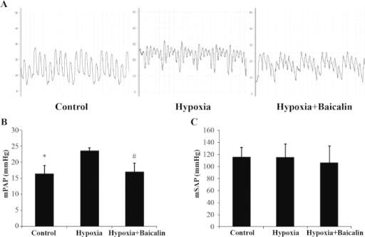 Effect of baicalin on hypoxia-induced pulmonary hypertension. (A) Demonstrative traces of mean pulmonary artery pressure (mPAP) in each group of animals. (B) mPAP. *P<0.01, compared with hypoxia group; #P<0.01, compared with hypoxia group. (C) Mean systemic (carotid) arterial pressure (mSAP).