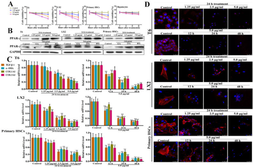 Effects of dioscin on HSCs activation of HSC-T6, LX2 and primary HSCs.(A) Impacts of dioscin on the cell viabilities of HSC-T6, LX2, primary rat HSCs. After incubating for 24 14h, the cells were treated with various concentrations of dioscin (1.25, 2.5 and 5.0 14μg/ml) or 0.1% DMSO as a negative control for 12, 24 and 48 14h, then the cell viability was evaluated by MTT assay. (B) Effects of dioscin on PPAR-γ protein expression in HSC-T6, LX2 and primary rat HSCs. The cells were treated with various concentrations of dioscin for 12, 24 and 48 14h. Total protein samples extracted from control and dioscin-treated HSCs were analyzed by western blotting assay (The cropped gels are used and full-length gels are presented in Supplemental Figure S9). (C) Effects of dioscin on the mRNA levels of TGF-β1, α-SMA, COL1A1 and COL3A1 in HSC-T6, LX2 and primary rat HSCs. The cells were treated with various concentrations of dioscin for 12, 24 and 48 14h, and then total RNA samples were extracted from control and dioscin-treated HSCs, which were measured by real-time PCR assay. (D) Effects of dioscin on the levels of α-SMA in HSC-T6, LX2 and primary rat HSCs based on immunofluorescence assay (10000 × magnification). After treatment with various concentrations of dioscin for 12, 24 and 48 14h, the expression of α-SMA was detected by immunofluorescence, and DAPI was used to visualize the nucleus. Data are presented as the mean ± SD (n ≥ 3). *p < 0.05 and **p < 0.01 compared with the control group.
