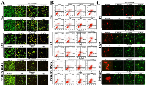 Dioscin induced apoptosis of HSC-T6, LX2 and primary HSCs.(A) Effects of dioscin on apoptosis of HSC-T6, LX2 and primary HSCs based on AO/EB staining, which were treated with 5.0 14μg/ml of dioscin for 12, 24 and 48 14h, or treated with different concentrations of dioscin (1.25, 2.5 and 5.0 14μg/ml) for 24 14h (200×, final magnification). (B) After being treated with 5.0 14μg/ml of dioscin for 12, 24 and 48 14h, or treated with different concentrations of dioscin (1.25, 2.5 and 5.0 14μg/ml) for 24 14h, HSC-T6, LX2 and primary HSCs were stained with annexin V/PI, and then analyzed by flow cytometry for quantitative detection of cell apoptosis. (C) HSC-T6, LX2 and primary HSCs were incubated with 5.0 14μg/ml of dioscin for 12, 24 and 48 14h, or treated with different concentrations of dioscin (1.25, 2.5 and 5.0 14μg/ml) for 24 14h, then the cells were dual-stained for TUNEL (green) and α-SMA (red) (original magnification 200×).